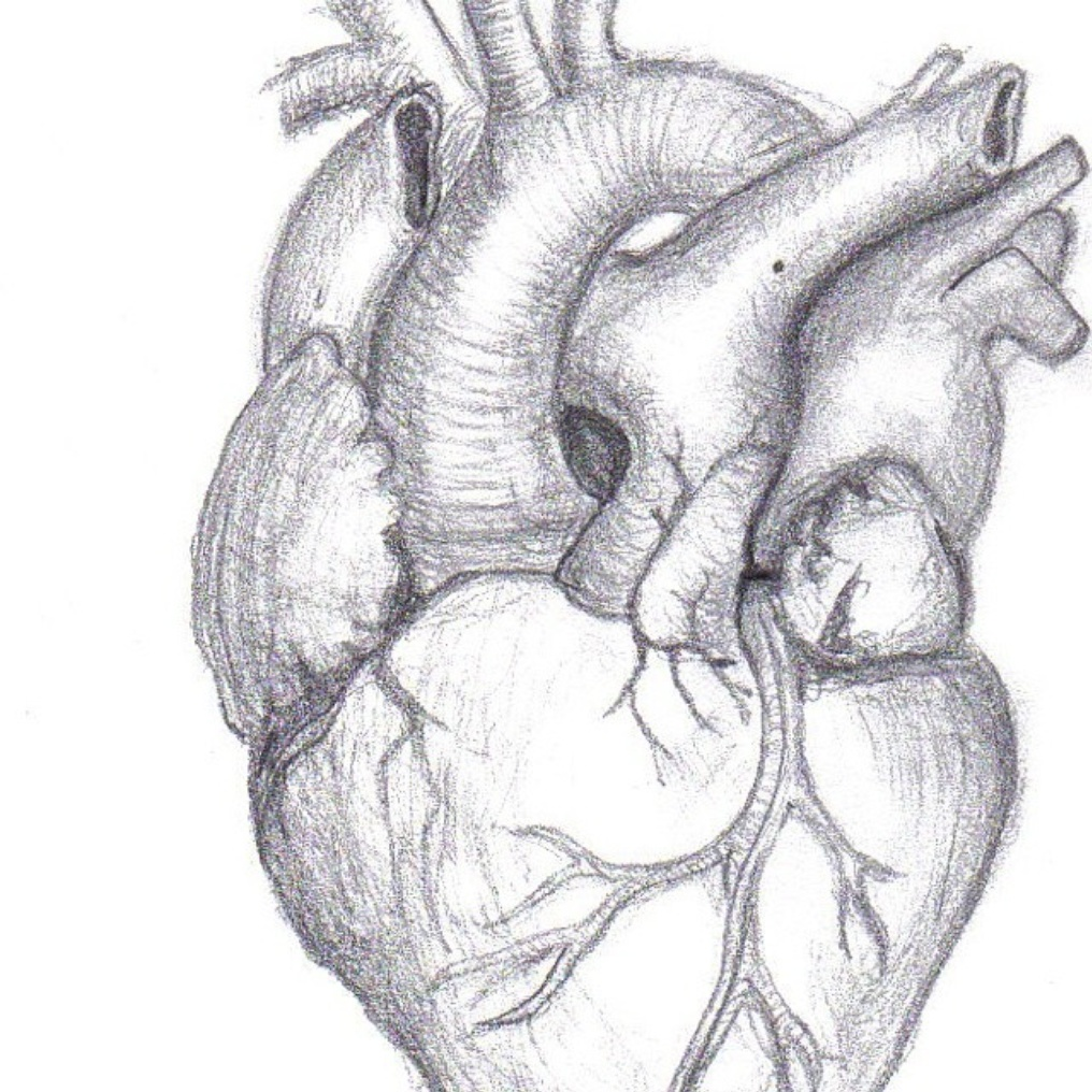 drawings of hearts - 662×895